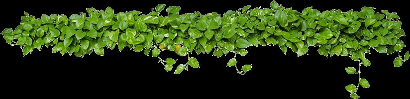 Creazione manutenzione Giardini a Vicenza Amico Verde Sandrigo