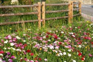 Creazione manutenzione giardini Sandrigo Vicenza