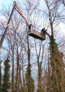 Potatura abbattimento alberi Sandrigo Vicenza