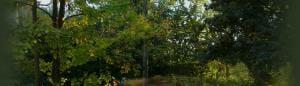 Potatura e abbattimento alberi Sandrigo Vicenza